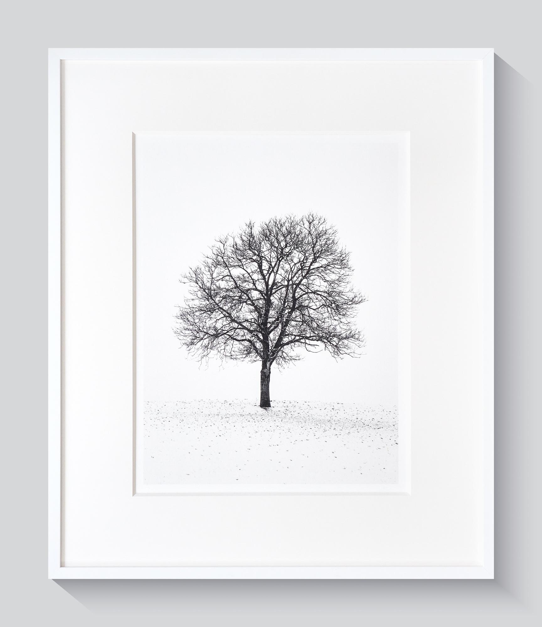 Portrait d'arbre PT 30x40cm