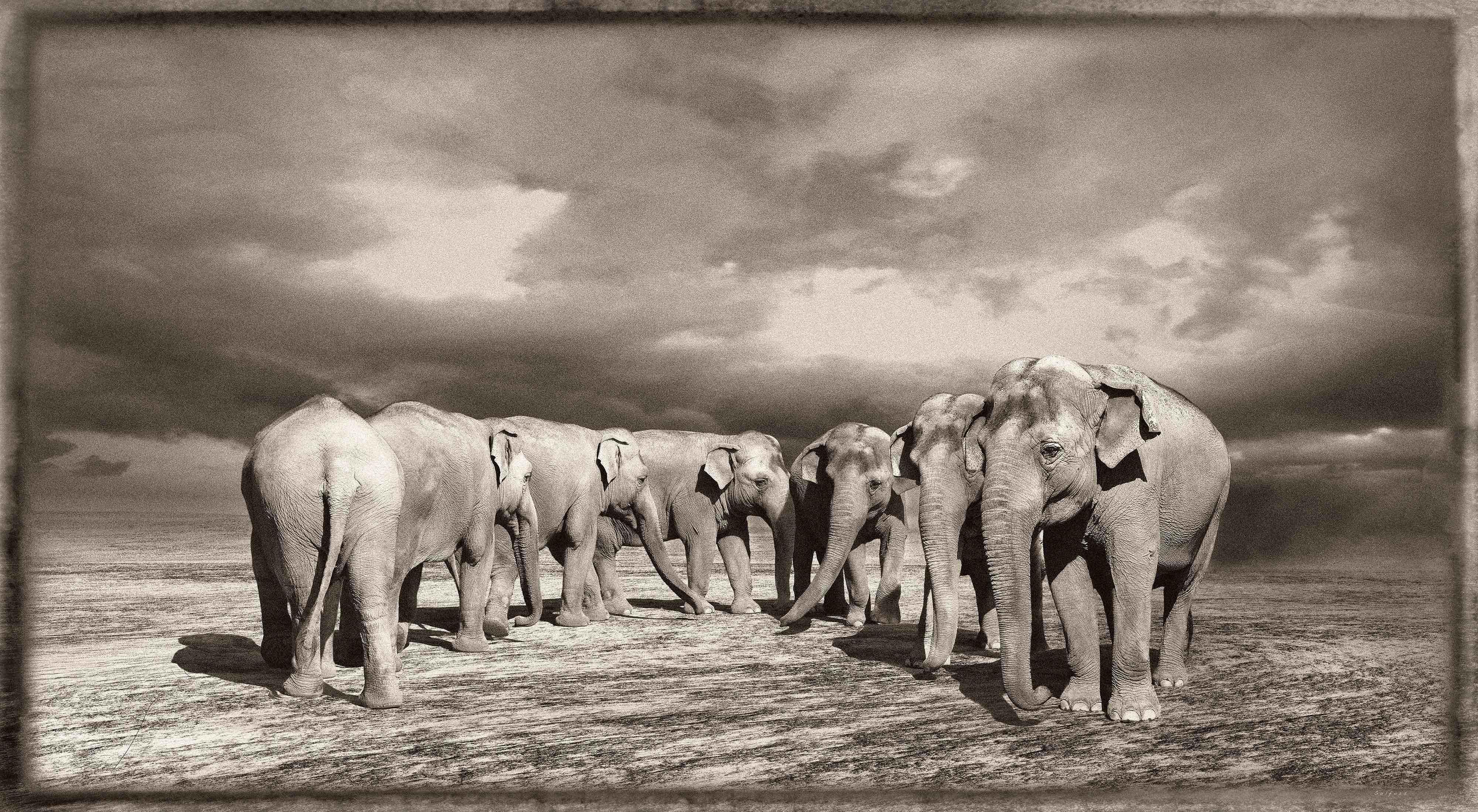 Jan Gulfoss Elephant Turn Photography
