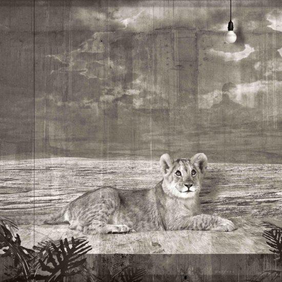 Jan Gulfoss Lionceau dans une vitrine et ampoule Photography
