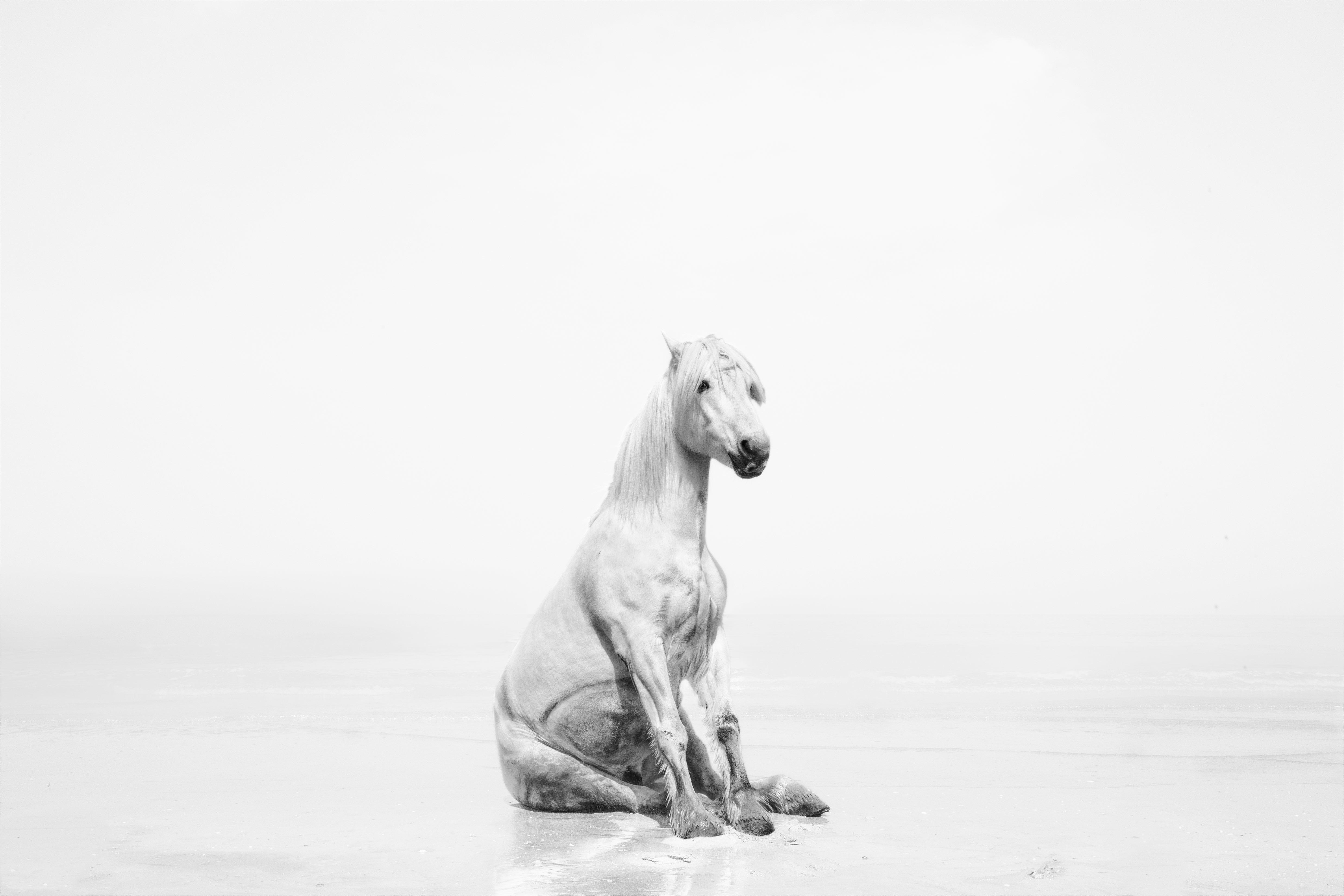 Isabel Munoz Exhibition Galerie Daltra Geneva Photography Horses