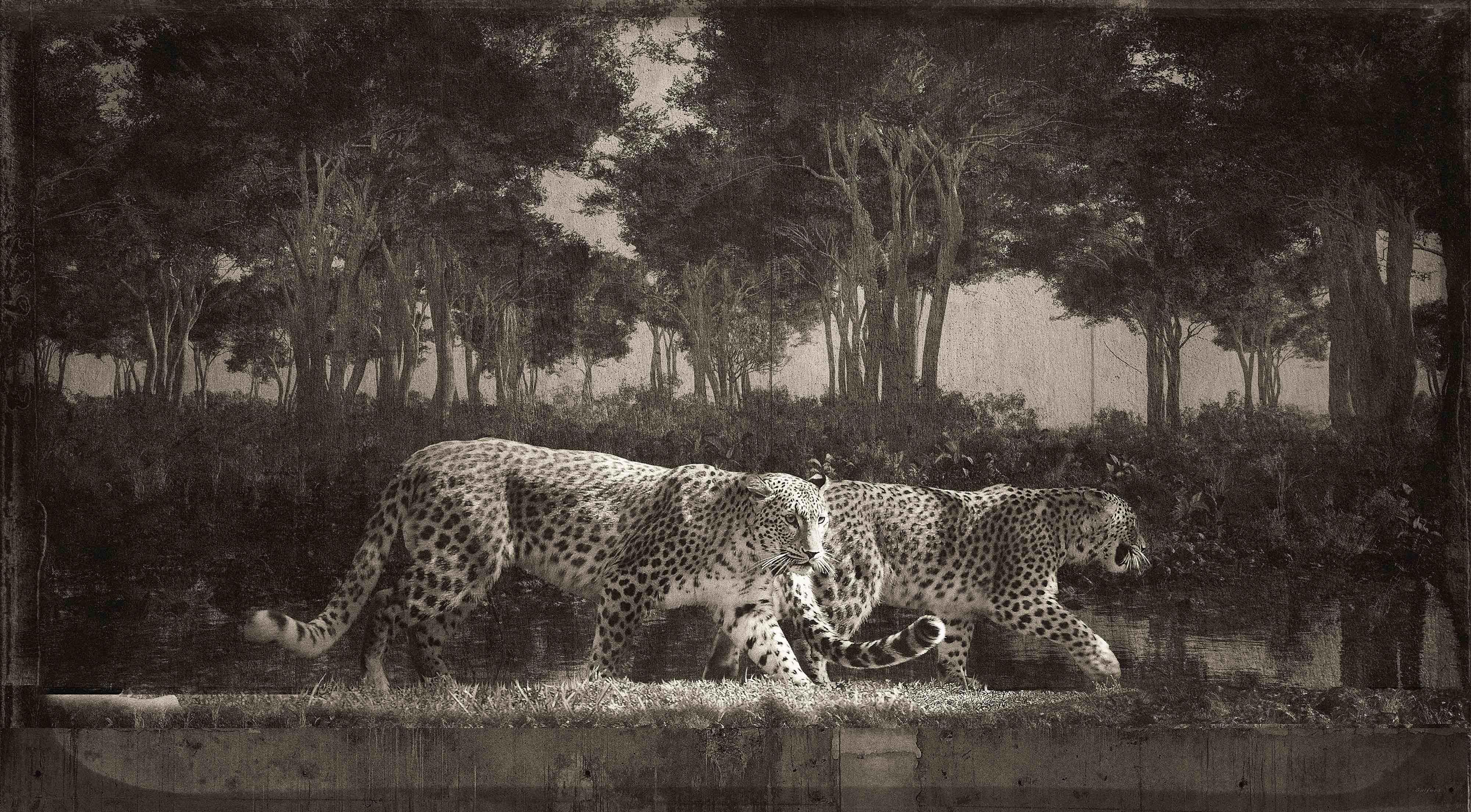 Jan Gulfoss Panthers on a scene Photography